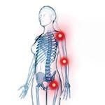 Articulaciones - Huesos